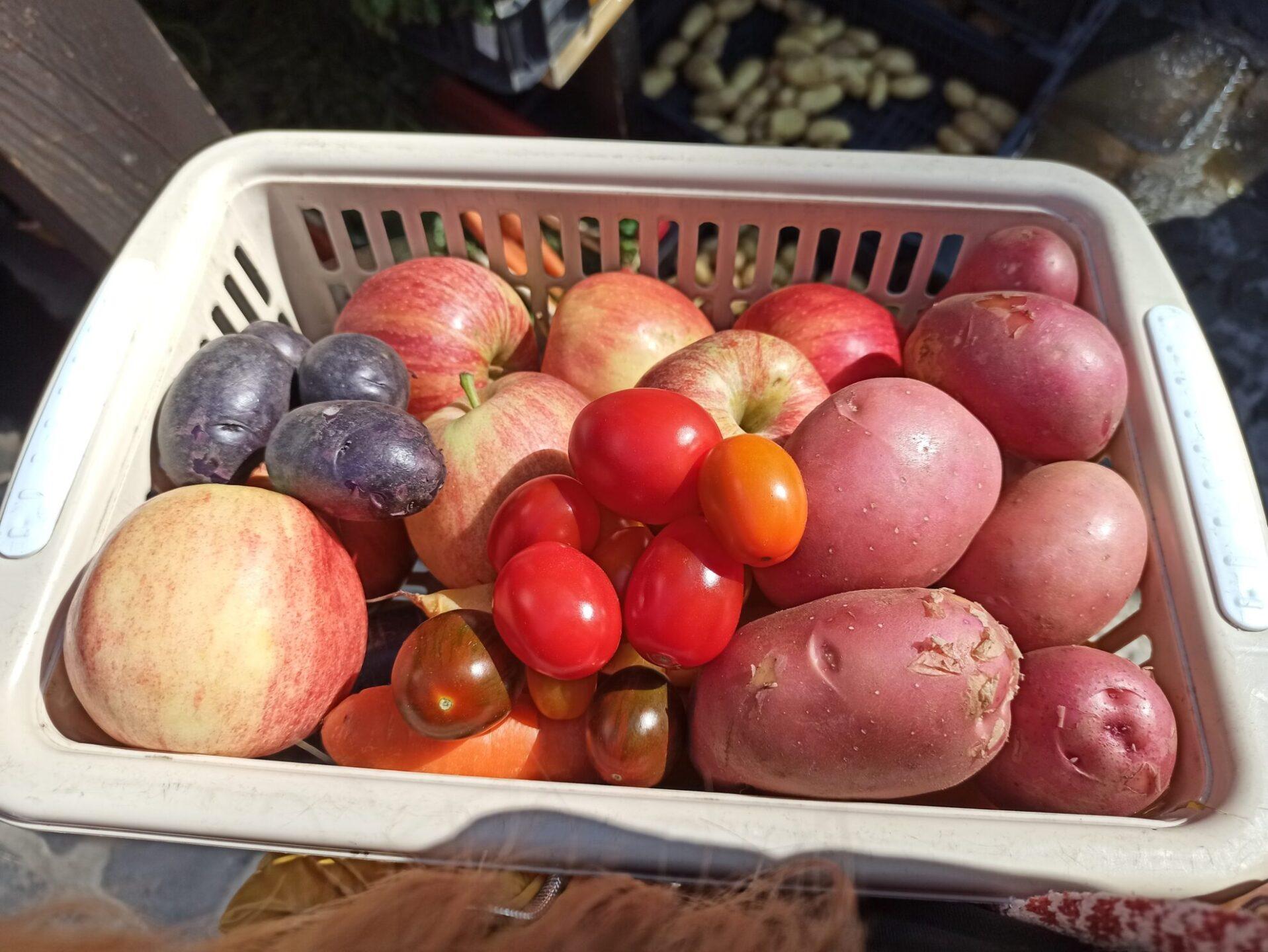 Termelői zöldségek